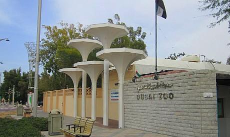 zoo دبي